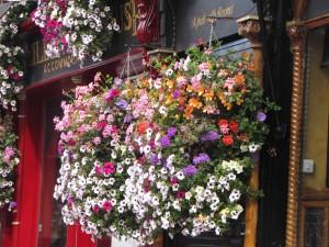 ireland - flowers